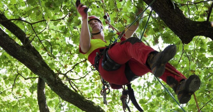 GaLa Hötter Projekte_Baumpflege
